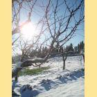 au verger la neige resplendit